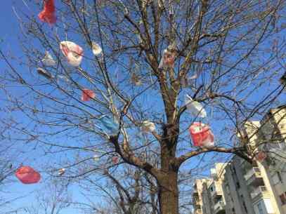 Podgorica Tüten von unten in Baumkone
