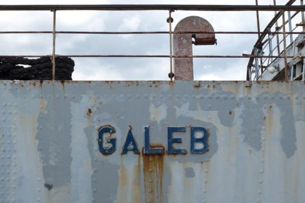 Galeb schild